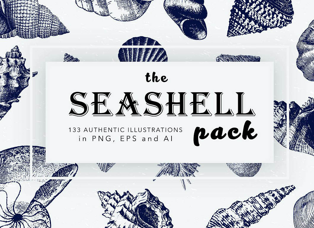 Vintage Seashell Illustration Mega Bundle